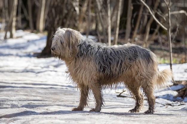 Puli adulto em parque no inverno cães estranhos