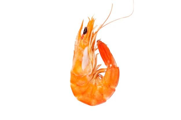 Tasty Shrimp On White Background Photo Free Download