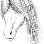 Premium Vector Hand Draw Horse Head Illustration
