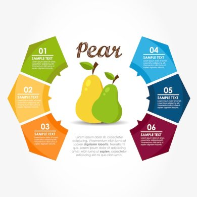 Infographic template with pears Vector   Free Download Infographic template with pears Free Vector