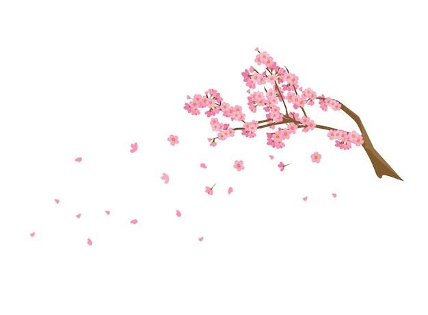 Branches De Fleurs De Cerisier Sakura Automne Saison Des Eclaboussures Printemps Annuel Du Japon Vecteur Premium