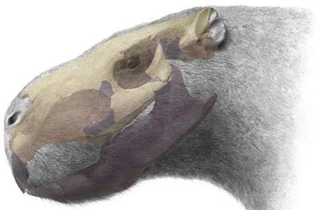 Artist's reconstruction of the one-tonne beast, showing the fossil in light grey