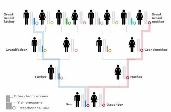 Jalur pewarisan Penanda Genetis