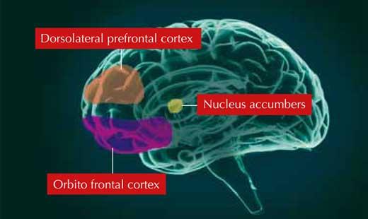 Sirkuit pendorong motivasi di otak