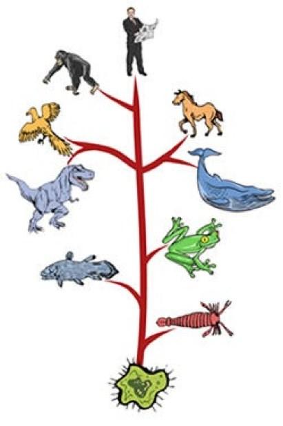 Pohon Evolusi, refleksi hasil kerja genom