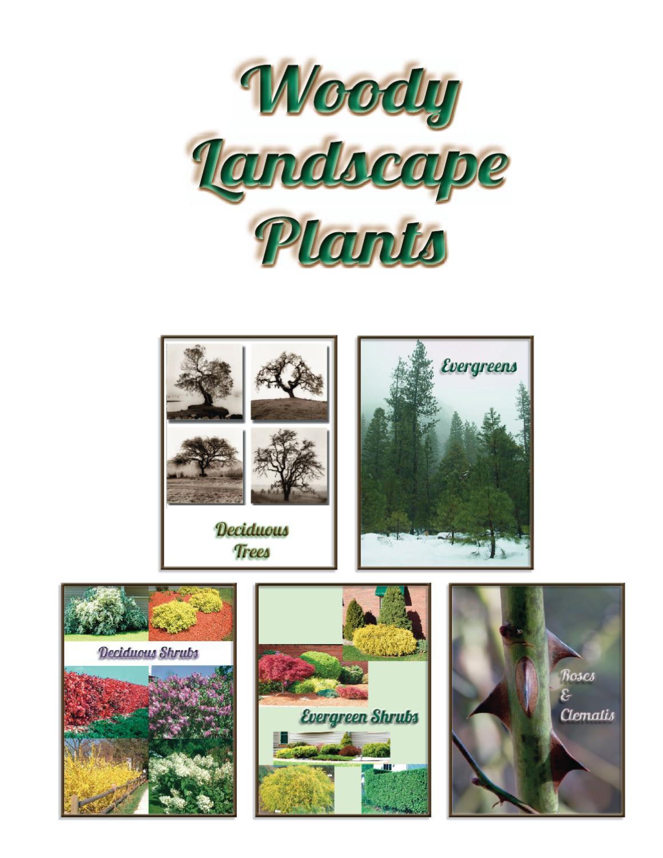 Woody Landscape Plants By Vickie Bartman Issuu