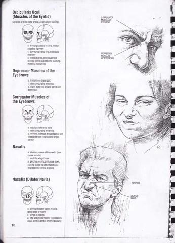 Drawing Human Anatomy - Giovanni Civardi by Alejandro ...