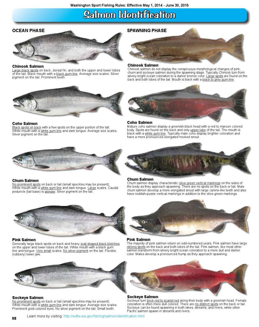 saslmon fishes types