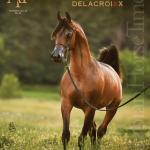 Arabian Horse Times Volume 47 No4a By Arabian Horse Times Issuu