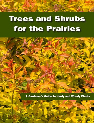 Trees Shrubs For The Prairies By Landscape Alberta Issuu