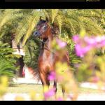Arabian Horse Magazine N2 2019 By Arabian Horse Magazine Issuu