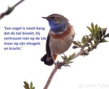 Kindercoaching - De website van praktijkvogelvlucht!