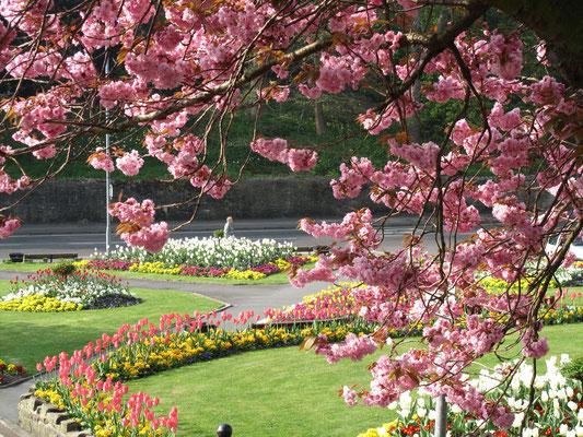 Church Flowers Garden Churchyard And The Green St Mary