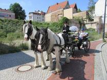 Familien Kutsch Und Kremserfahrten In Mecklenburg Vorpommern