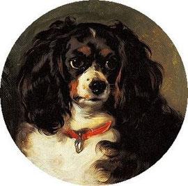 Risultati immagini per dash cane regina vittoria