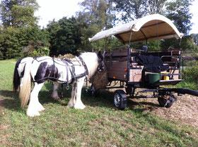 Mecklenburger Pferde Stockfotos Und Bilder Kaufen Alamy