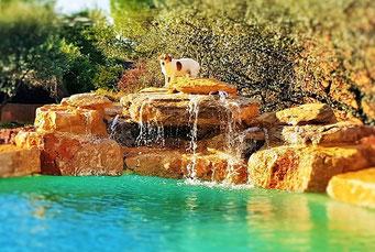 piscine rochers cascade debordement