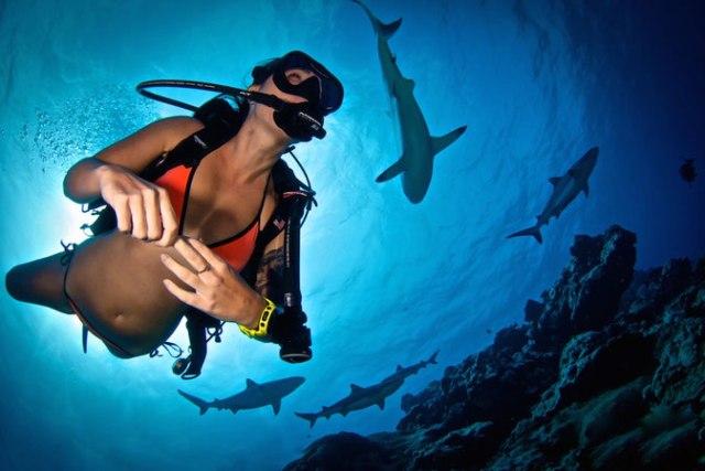 scuba diver bloggers