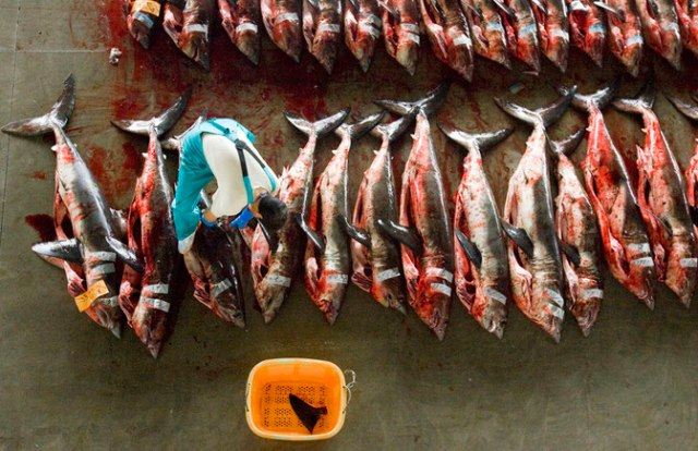 shark finning hong kong