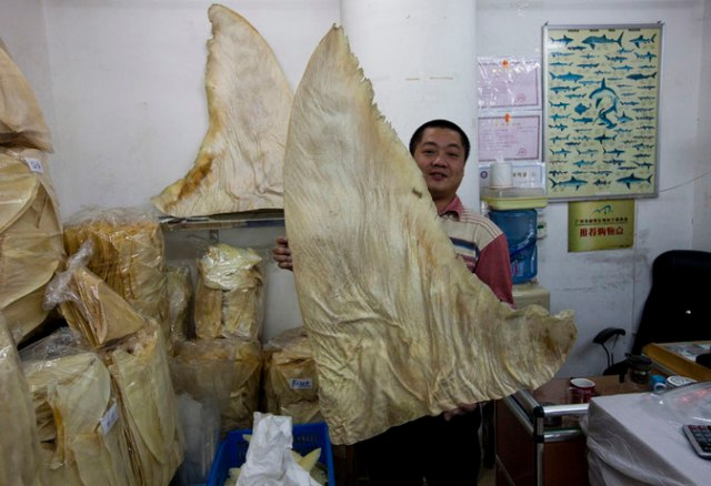 hong kong shark finning