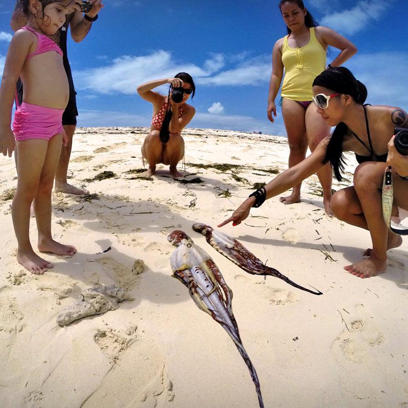 Fresh Octopus - Siargao, Philippines © Sabrina Iovino | via @Just1WayTicket