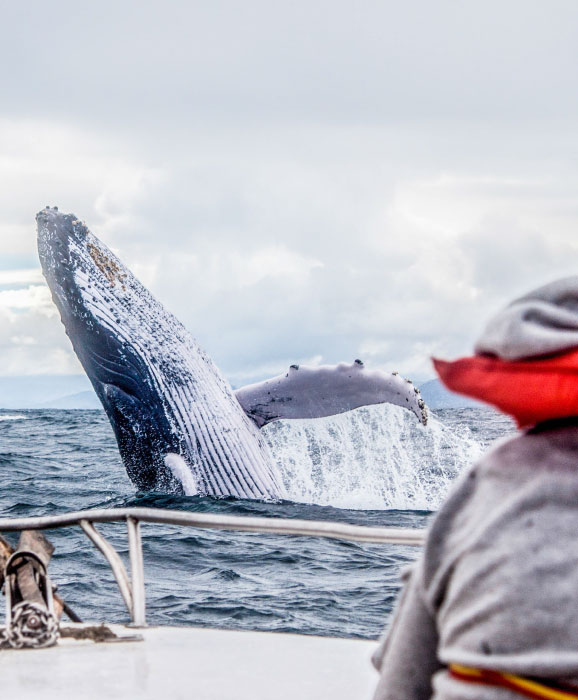 best-whales-dolphins-watching-destinations