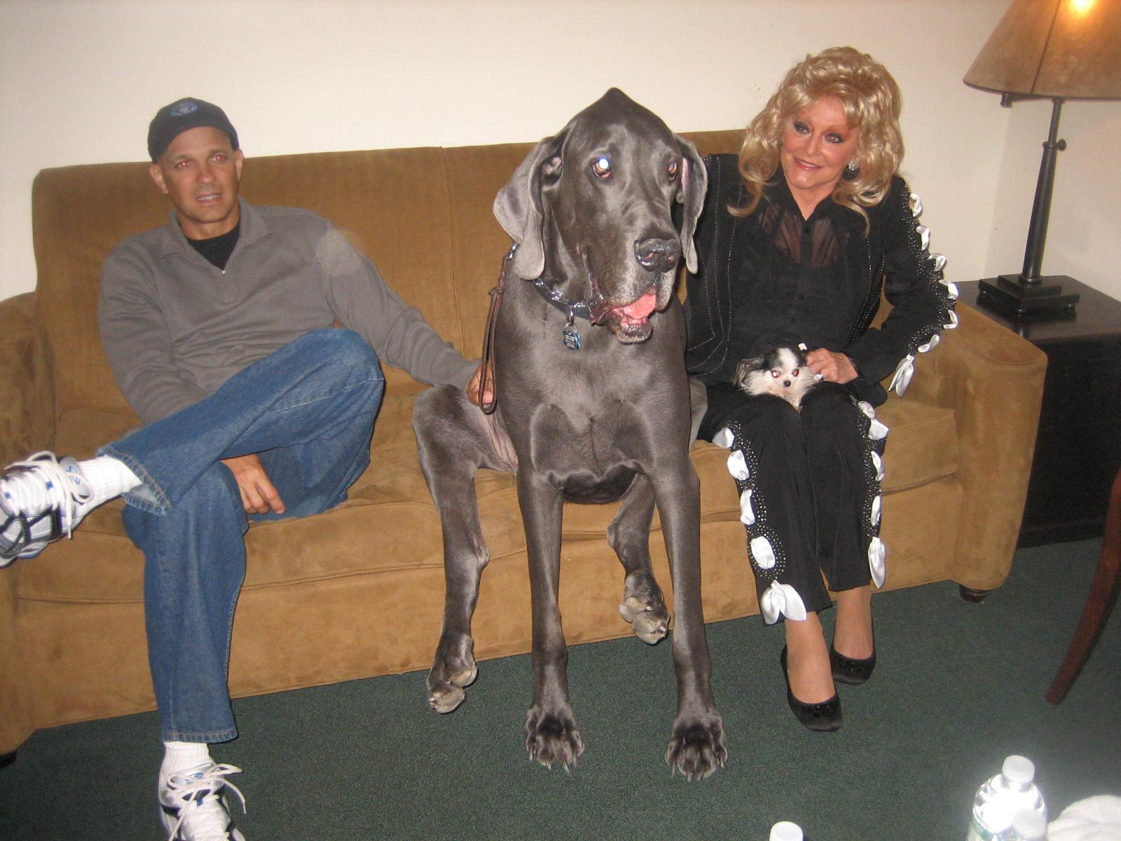 Smallest Dog World Guinness 2013
