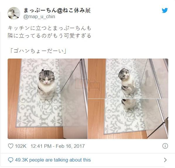 Biểu cảm 'dỗi cả thế giới' của chú mèo khi đòi chủ nhân ôm nhưng không được