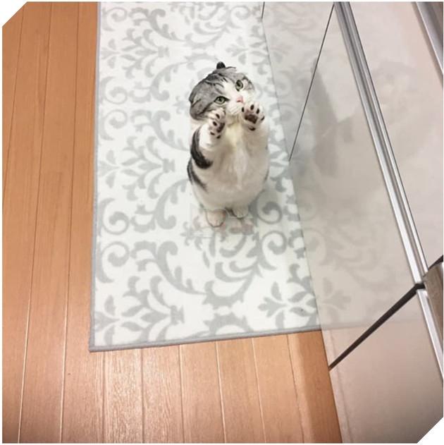 Biểu cảm 'dỗi cả thế giới' của chú mèo khi đòi chủ nhân ôm nhưng không được 2