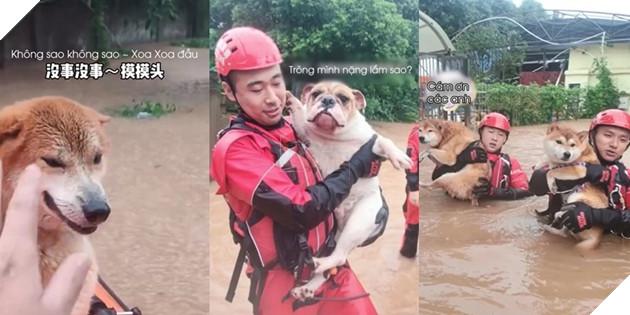 Những chú chó lần lượt được cứu ra. (Ảnh: Cắt từ clip).
