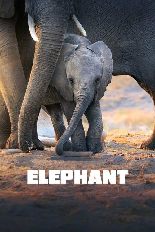 Key visual ofElephant