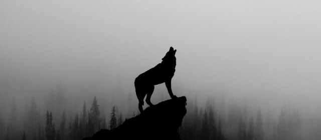 The wolf is the most compassionate among the animals of the zodiac