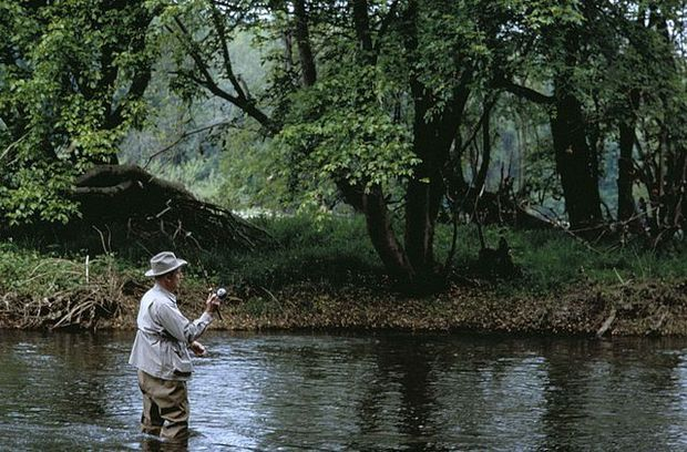 Dam Removals To Restore Brook Trout Habitat In Connecticut