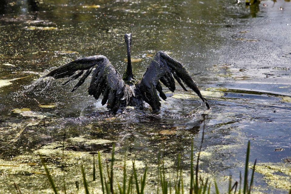 Image result for oil spill