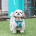 Its Dog(イッツドッグ) バブルキャンディーハーネス/グリーン【S】