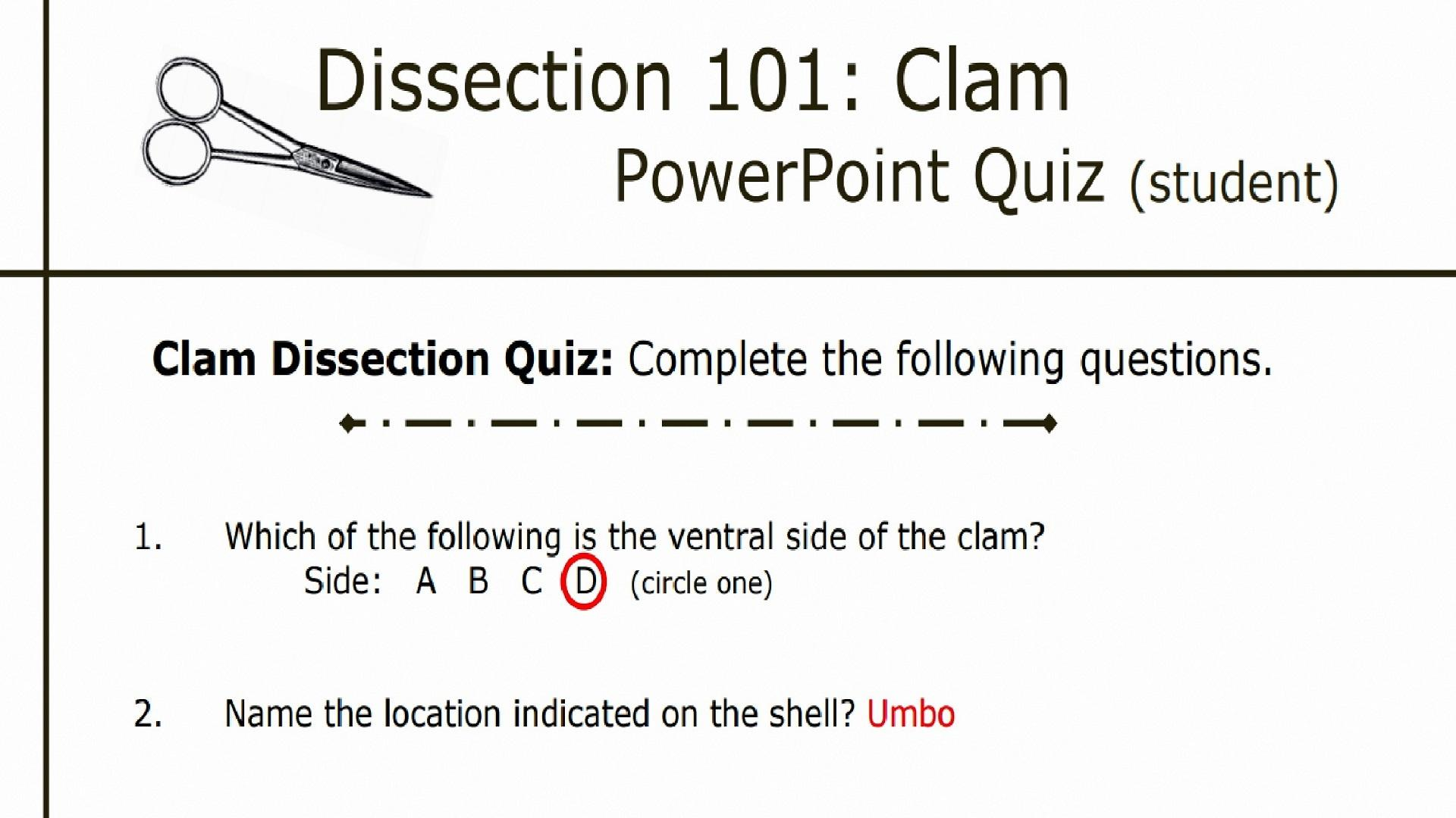 Bestseller Clam Dissection Lab Answers