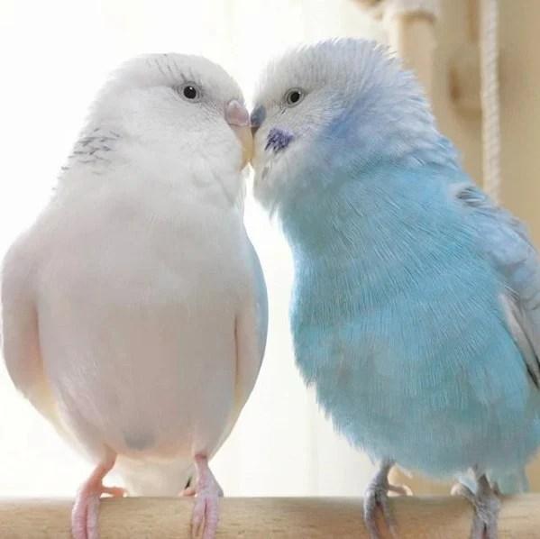 比利時文豪Maeterlinck的著作《青鳥》中描繪了主角尋找青鳥從而獲得新生並過上幸福生活的童話故事