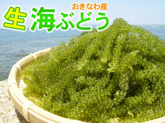 Image result for 冲绳海葡萄
