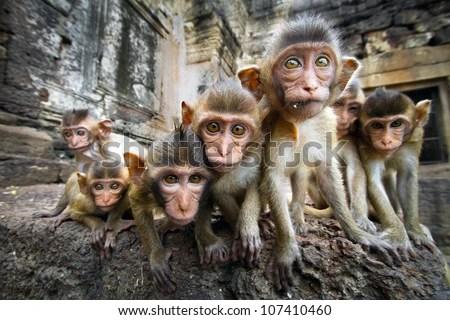Baby monkeys are curious,Lopburi, Thailand. - stock photo