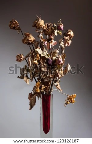 Still life of dry flowers in a glass vase - stock photo