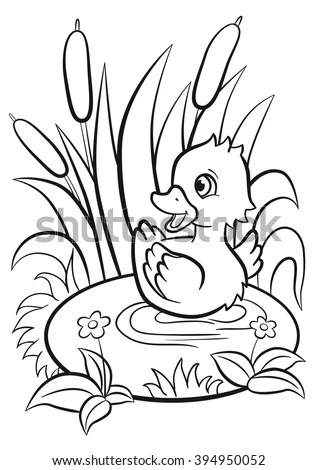 coloring pages little cute duckling swims on the pond and smiles