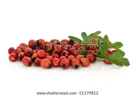 Black Hawthorn Toxic Gtgt Washington Hawthorn Medicinal Uses