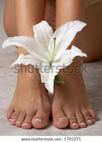 Wet Feet And Madonna Lily Stock Photo 1705375 : Shutterstock