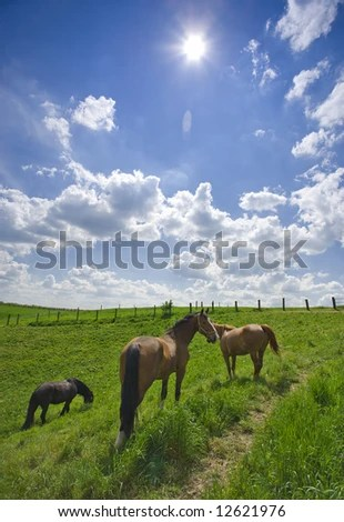 stock photo : three horses grazing on a meadow in high noon sunlight, wide-angle view with lens flare