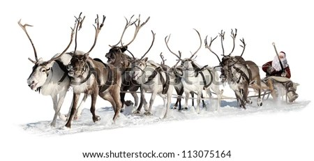 Image result for reindeer harness