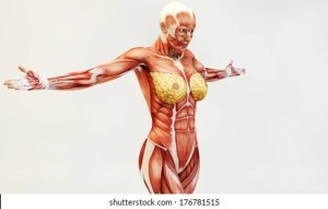 Female Muscle Anatomy Images, Stock Photos & Vectors | Shutterstock