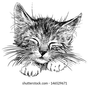 Realistic Animal Drawing Images Stock Photos Vectors Shutterstock