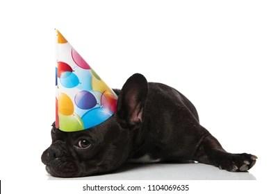 Happy Birthday French Bulldog Images Stock Photos Vectors Shutterstock