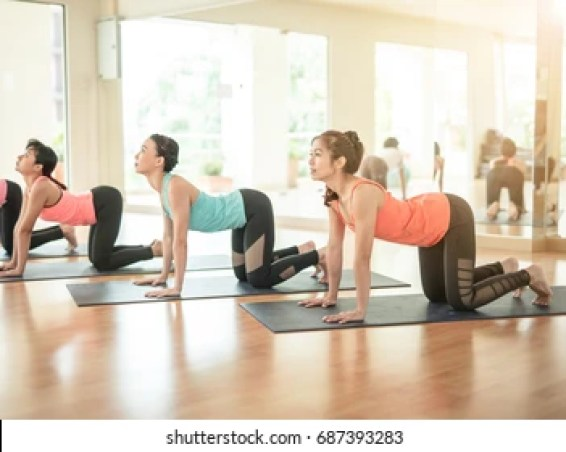 Cow Yoga Pose High Res Stock Images | Shutterstock