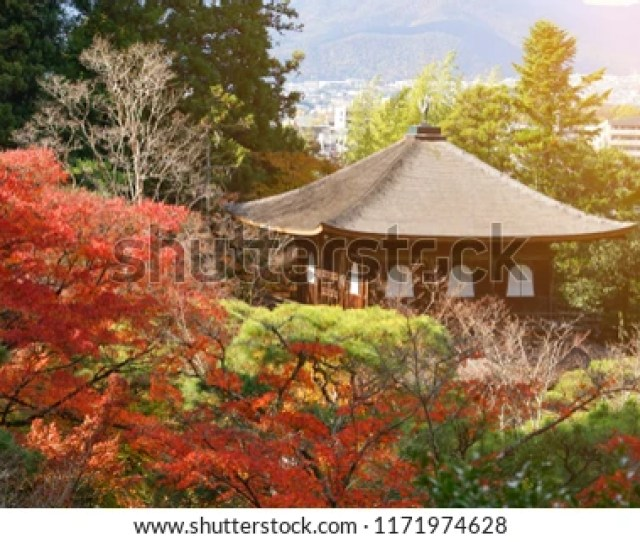 Background And Wallpaper Of Beautiful Garden With Pine Tree Colorful And Vibrant Autumn Foliage Maple